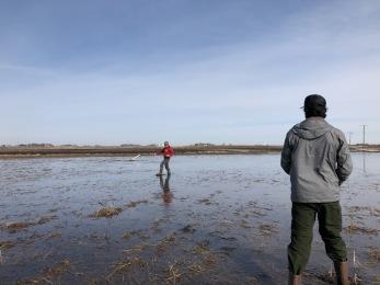 flooded field carlos